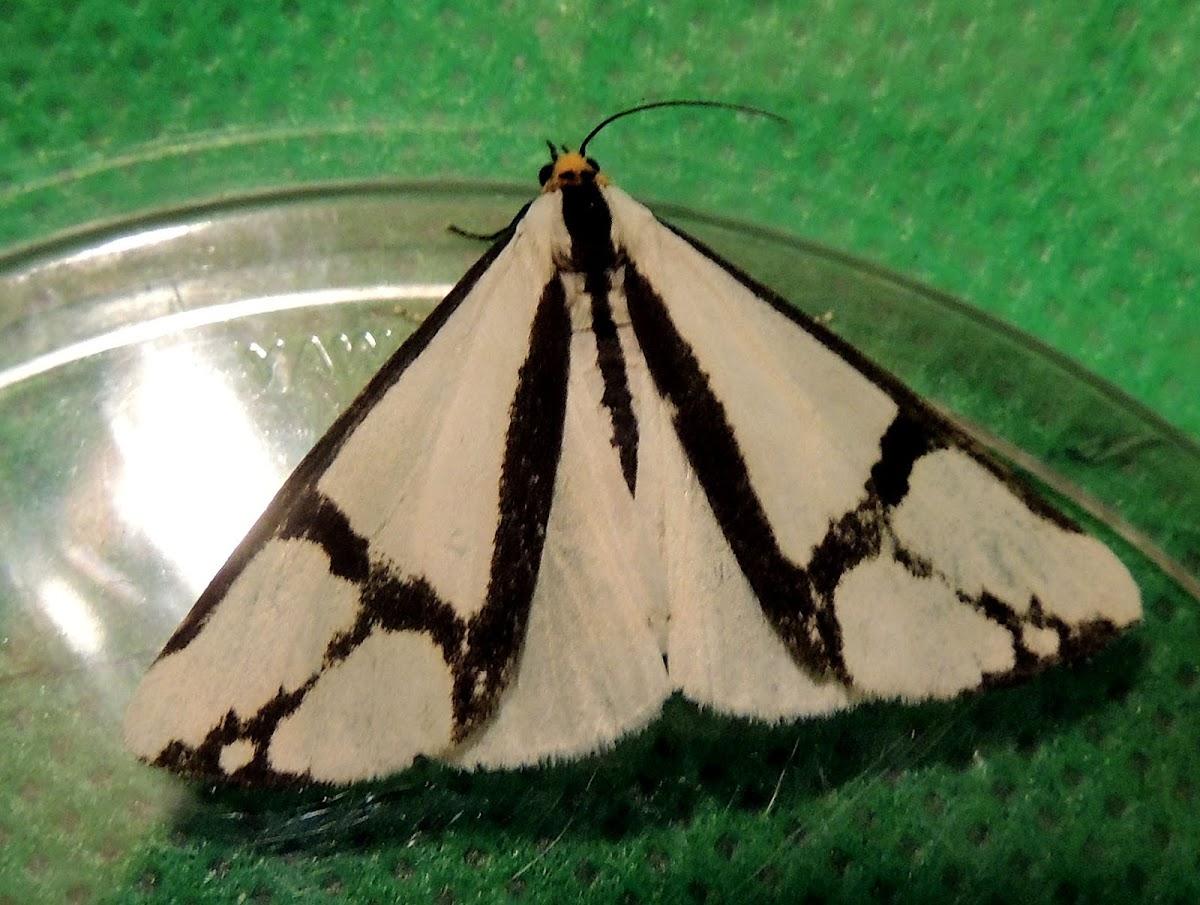 The Neighbor moth