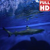 Sharks Live Wallpaper HD