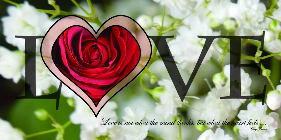 Love by Shannon Maltbie-Davis - Typography Quotes & Sentences ( love, valentine's day, rose, heart, red, quote, baby's breath, postcard, typography, valentine, flower,  )