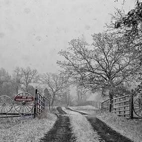 Snowy day in NE Oklahoma by Tasha Morrison - Uncategorized All Uncategorized (  )