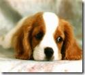 free-cute-dog-screensaver