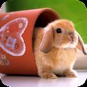 Bunny Rabbit – PuzzleBox logo