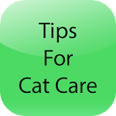 Tips For Cat Care