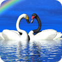 Beautiful Birds Wallpapers icon