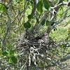 Thorn Nest