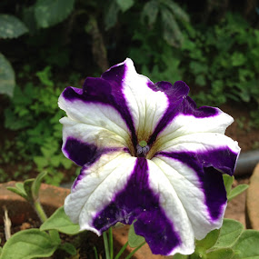 Purple & White by Swapnanil Dhol - Flowers Single Flower ( purple, white, india, flower )