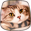 Cats Live Wallpaper icon