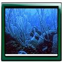 Aquarium Legend Live Wallpaper logo