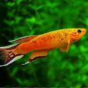 Tropical Fish Encyclopedia icon