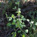 Elbow bush
