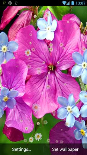 玩免費個人化APP 下載春天的花朵動態壁紙 app不用錢 硬是要APP