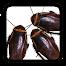進撃のゴキブリ
