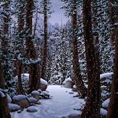 Live Wallpaper - Winter Forest