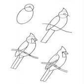 Learn To Draw Birds And Parrot