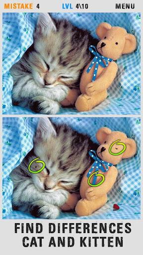 當場差異貓和小貓
