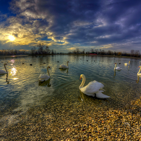 Swan lake by Boris Frković - Landscapes Waterscapes (  )