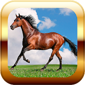 Horses Puzzle & Wallpapers