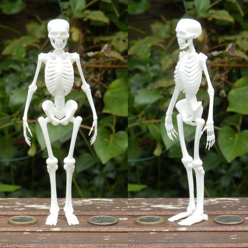 立っている骸骨