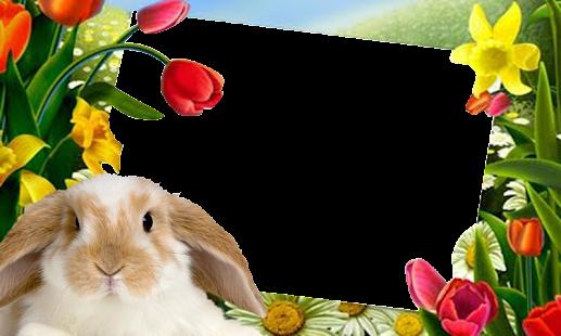 app easter bunny pictures frame apk for windows phone - Easter Photo Frames