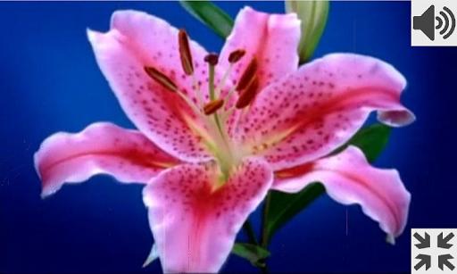 Flowers Breathing Games