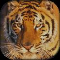 Tiger Sound Board