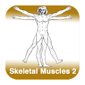 Anatomy - Skeletal Muscles 2 icon