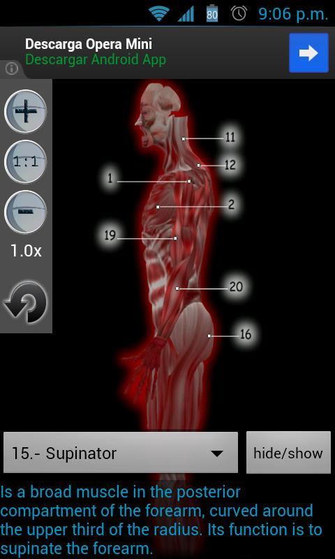 Músculos Anatomia - screenshot