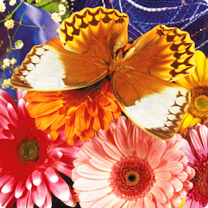 Butterfly Puzzle for PC and MAC