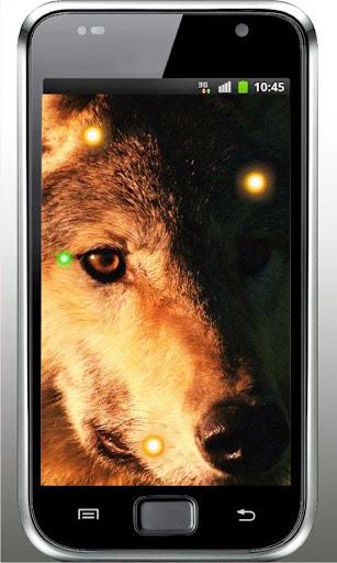 Wolf Best HD live wallpaper