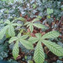 UK Tree Leaves