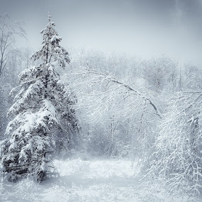 by Al Duke - Landscapes Weather (  )