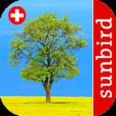 Baum Id Schweiz - Bäume
