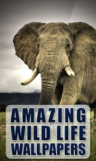 Amazing Wildlife Wallpapers