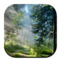 Forest Morning Live Wallpaper logo