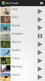 Bird Sounds- screenshot thumbnail