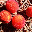 Madroño/Strawberry Tree fruits