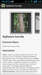 Palm ID Key- screenshot thumbnail
