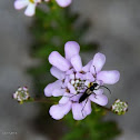 Insecto na flor