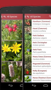 Wild Berries and Herbs 2 LITE - screenshot thumbnail