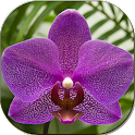 Beautiful orchids logo