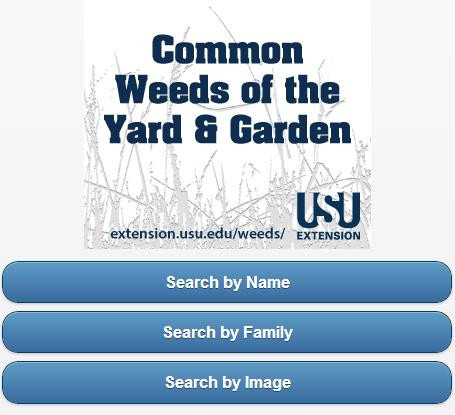 Common Weeds of Yard Garden