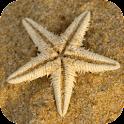 Sea Star Wallpaper icon