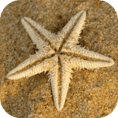 Sea Star Wallpaper