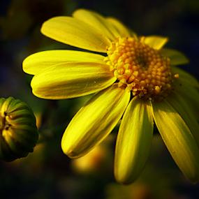 by Tatjana Koljensic - Flowers Single Flower