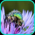 Beetle Wallpaper icon