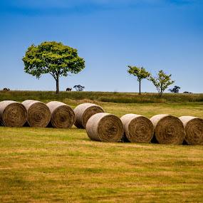 Hay Rolls and Bouncing Roos by Matt Simner - Landscapes Prairies, Meadows & Fields ( paddock, kangaroo, australia, hay rolls )