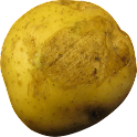 Rotate-O-Potato Live Wallpaper icon