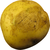 Rotate-O-Potato Live Wallpaper