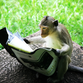 Literate Monkey by Kelly Maize - Animals Other Mammals ( funny, humor, travel, monkey, cambodia,  )