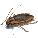 Kill Cockroach logo